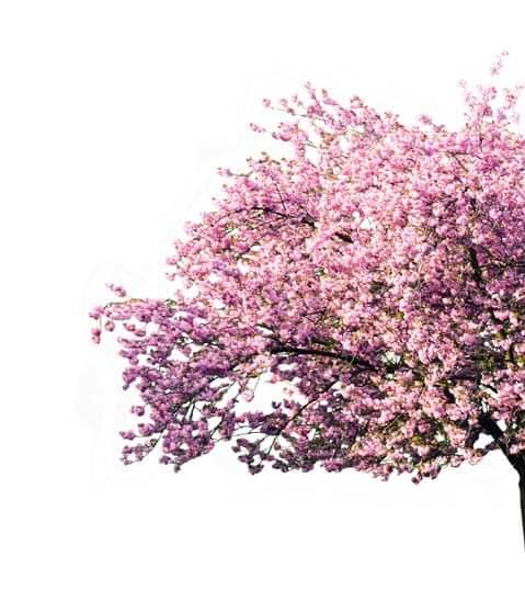 Blüte Liegestuhl